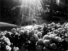 """Beauty Among the Flowers"" (Sion Fullana) Tags: nyc people urban blackandwhite newyork painterly blancoynegro beauty mono streetphotography westvillage beautifullight newyorkers newyorklife sunflare iphone jacksonsquarepark 500x500 urbanshots urbannewyork iphonephotography iphoneshots camerabagapp iphoneography iphoneographer sionfullana guyonabench gorgeousspotlight beautyamongtheflowers throughthelensofaniphone mobilephotogroup"