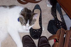 Mom's Shoe!