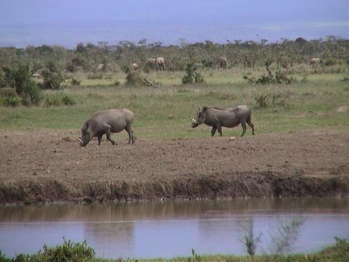 SW Warthogs