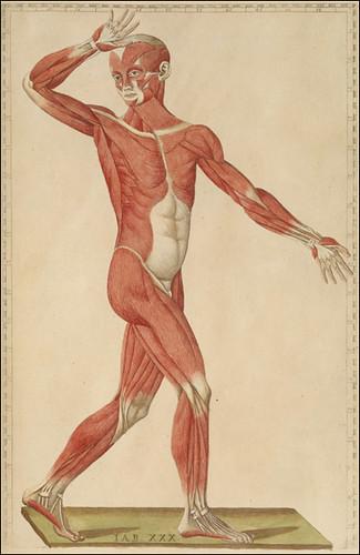 Eustachi & de'Musi, 1552
