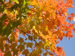 Foliage (brooksbos) Tags: city blue autumn light red sky urban orange sun sunlight color colour tree green fall nature leaves yellow boston geotagged ma photography photo sony newengland cybershot foliage bostonma southend sonycybershot bostonist bay masschusetts 02115 south lurvely back end thatsboston dschx5v hx5v brooksbos