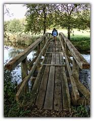 mit kalten Hnden II (Gnter Hickstein) Tags: bridge water forest river wasser bach brcke fluss wald elvin uelzen gerdau gnterhickstein