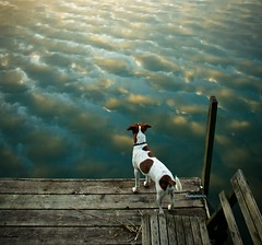 Even dogs enjoy the beautiful nature by Voetmann