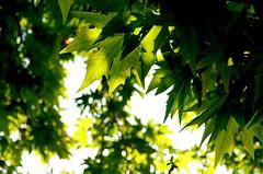 under tree (Beshef) Tags: trees light sun tree green leaf day iran tehran       shahram      shahramsharif