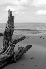 (charlotte spode) Tags: bw beach nature water brasil places riosofrancisco sergipe brejogrande cabeo sonyh2