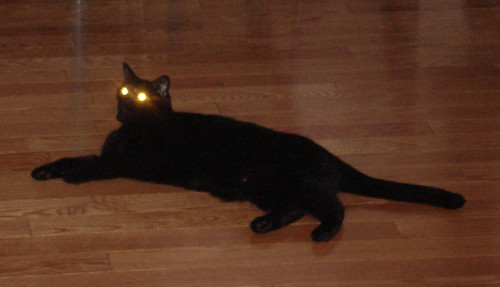 """I shoot you with my laser eyes"""