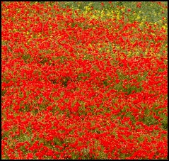 memory: up the line to death (Simon_K) Tags: beautiful suffolk martha wwi wwii fallen memory poppies worldwarone remembered remembranceday remembrance 1914 1915 firstworldwar 1917 1918 armisticeday 111111 1916 rushmere somme 11thday playford 11thnovember november11th 11thhour 11thmonth battleofthesomme missingofthesomme 11thnovember2011