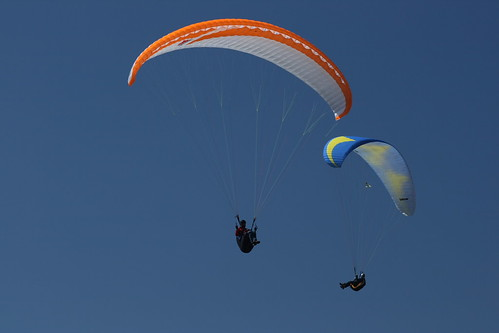 Paragliders & Gull