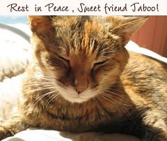 Rest in pease sweet friend Taboo