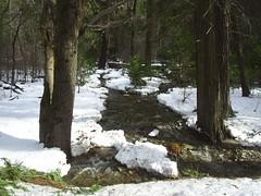 Yosemite March 2007 (hannah clan) Tags: mercedriver yosemitenationalparksierrassnowriver