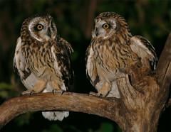 #108  (John&Fish) Tags: friends bird birding taiwan best 2007 specanimal wowiekazowie pigawards