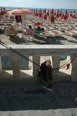 Basotti at the beach (lieludalis) Tags: travel beach dogs dachsund italianriviera rivieraligure