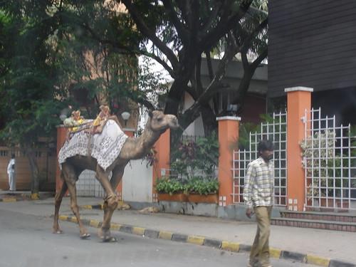 wildlife meets urban