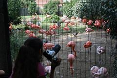 DC Zoo 124 (iamjosh) Tags: dczoo