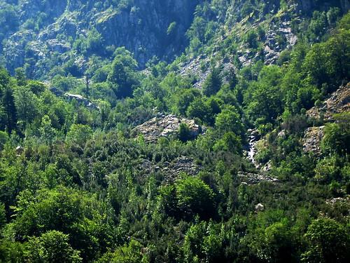 Ravin de Coracchia en RD… la végétation semble claire !