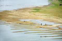the zebra river! :) (Tahsin Hossain) Tags: life playing reflection green texture water grass kids river children duck sand nikon lifestyle enjoy zebra dhaka bangladesh d90