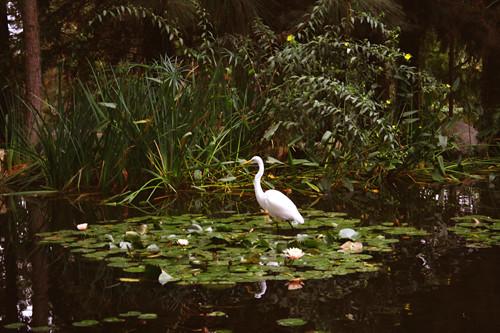 a small pond