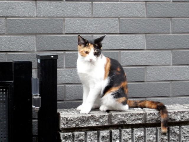 Today's Cat@2010-10-22