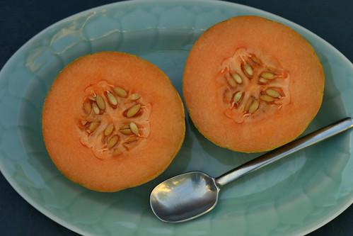 minnesotta midget melon