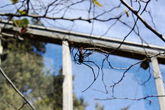 Spider Pavilion - Fall weather (The Natural History Museum of Los Angeles County) Tags: county history museum spider los natural angeles pavilion
