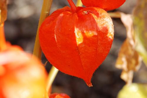 orange-f16