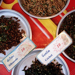 Crickets, silkworms and beetles