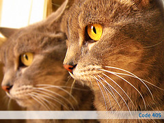 gatos (suspensin temporal) Tags: cats macro gatos clone efects
