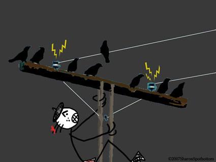 bird-talk