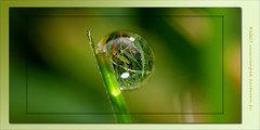 tropfenkugel in gruen (manfred-hartmann) Tags: leica macro reflection green germany deutschland lumix drops bravo drop explore frame grn makro hartmann soe gruen rahmen manfred tropfen kugel fz50 niedersachsen blueribbonwinner worldbest anawesomeshot frhwofavs top30green excapture theperfectphotographer