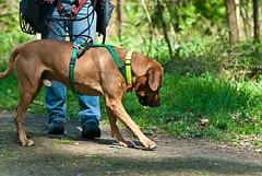 Go Sniff Seminar, April 2010 (Cave Cani) Tags: galerie hunde krpersprache hundeschule seminare freilauf suchspiel hundetraining hundeerziehung nasenspiel nasenwelt gosniff nasenarbeit suchspiele hundetrainingteamarbeit