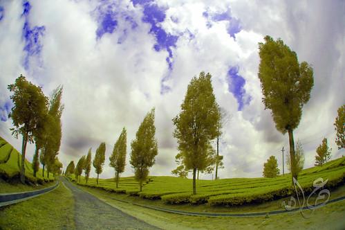 Kebun Teh Bah Butong, Kecamatan Sidamanik, Kabupaten Simalungun, Sumatera Utara (Visible IR)