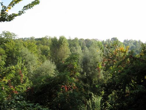 Mirafiori 6-10-2010 3
