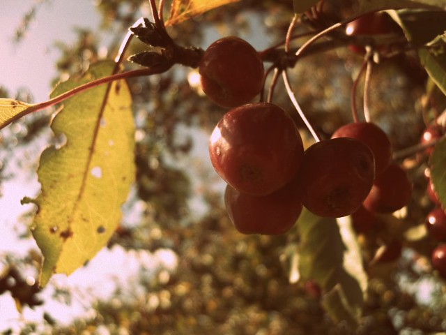 Berries 2