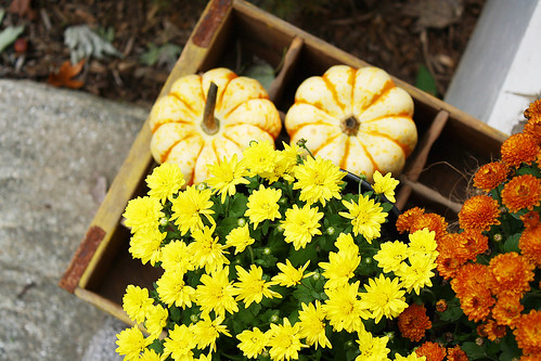mums, mini pumpkins