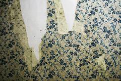 wallpaper 2 (monkeyfinger) Tags: old wallpaper colour peeling