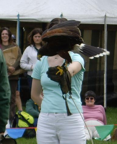 Me with Harris hawk