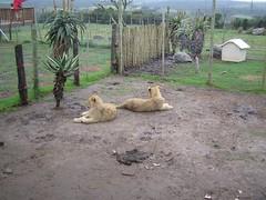 IMG_1332 (erilo) Tags: lionpark eastlondon