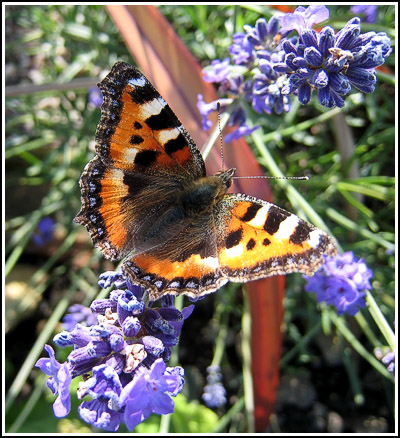 butterfly1 copy