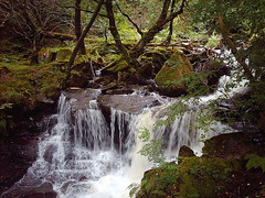 Cascade above Melincourt Falls (Need A Haircut) Tags: wales instantfav neathvalley melincourtfalls