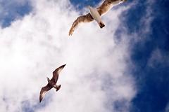 some of us fly, all of us fall (Jayna) Tags: uk blue sky film birds canon brighton 100 konica canonet ql17 centuria canonetgiiiql17 brighton2
