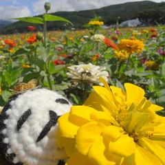 hanabatake park (kotechin) Tags: park lake yamanaka otama hanabatake