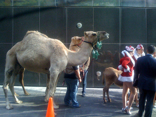 Dromedaries & Rockettes, 4