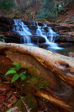 fallen-tree-fern-forest-waterfall / Forest Wander