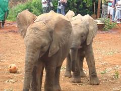 Elephant Orphanage Nairobi Kenya