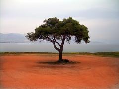 Lonely tree (AntonisP) Tags: trees tree topf25 explore greece lonely coolest soe goldenglobe littlestories salamina supershot aplusphoto ir