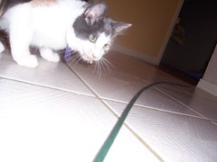 100_3239 (puffadust) Tags: pets animals melba
