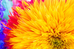 bright as the sun (Dennis_Chong) Tags: dahlia flowers red favorite flower macro yellow oregon wow petals nikon favorites kitlens 55mm bloom d40 nikond40 aplusphoto 1855mmf3556gii wowiekazowie top20yellow superhearts macrophotosnolimits empyreanflowers photofaceoffwinner colourartaward explorecamerafinder pfogold