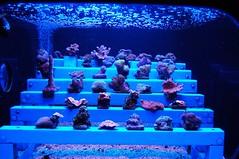 Maui Aquarium 140 (Karm2u) Tags: fish aquarium maui walker lou aquaticlife mauiaquarium karmon
