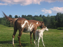Mother horse & foal in the pasture - by jennratonmort