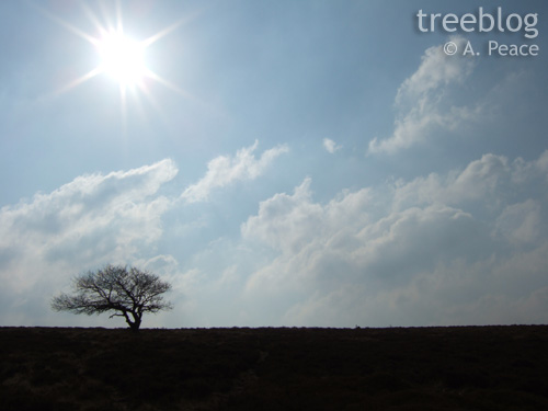 lonesome hilltop tree
